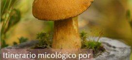 Segunda salida ambiental: Recorrido micológico por el Puerto de Canencia
